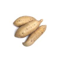 Sweet Potato (Kanang)